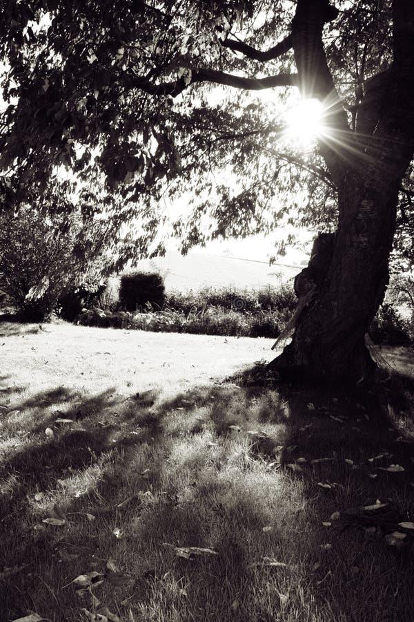 de zon van tuinAutum royalty-vrije stock afbeelding