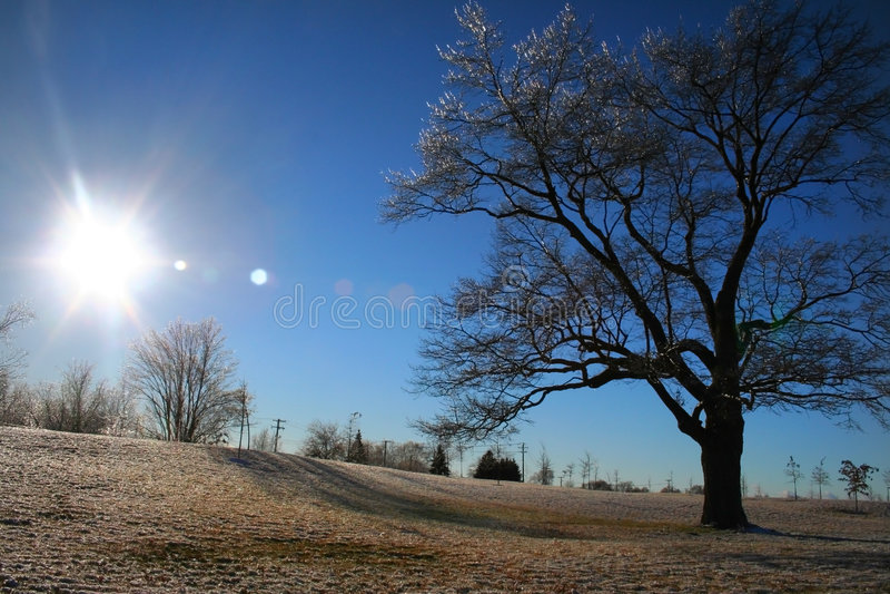 De zonlicht van de winter stock foto's
