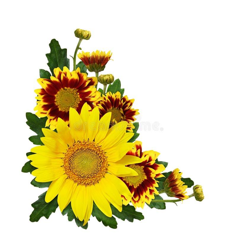 De zonnebloem, gele en rode chrysant bloeit, knoppen en bladeren in een hoekregeling stock foto