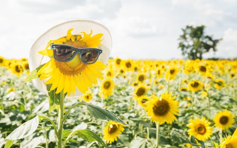 De zonnebril van de zonnebloemslijtage stock afbeeldingen