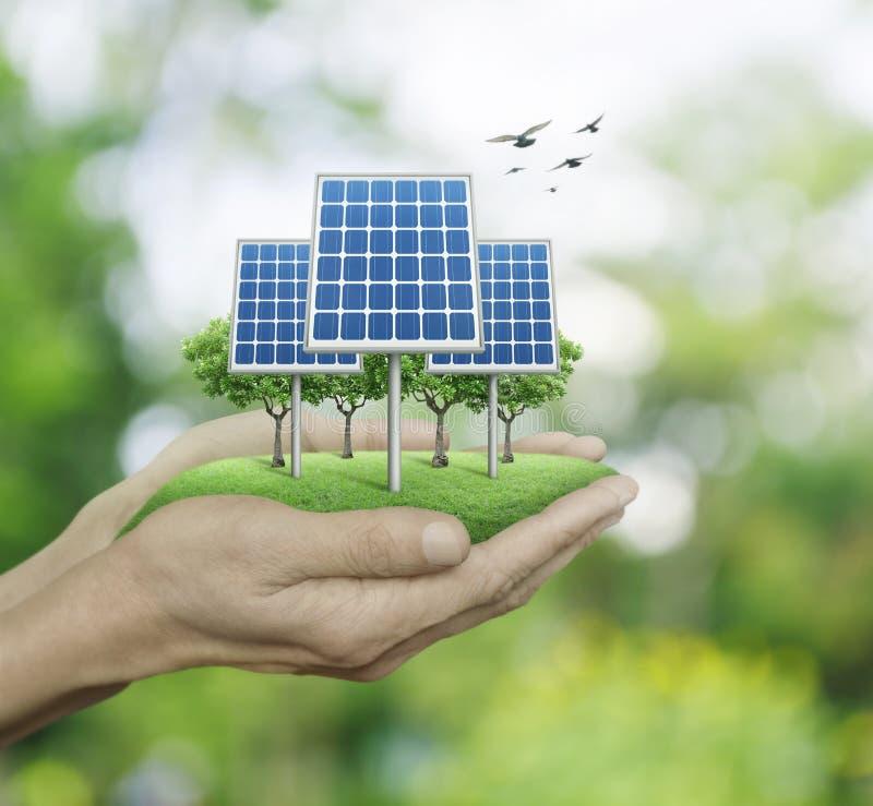De zonnecel bij de mens overhandigt onduidelijk beeld groene boom met vogels, Ecologi stock afbeeldingen