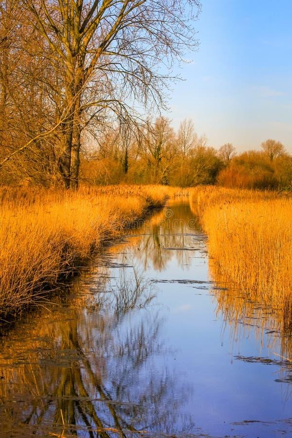 De zonneschijn van de recente middagwinter op het Moerasland in Fowlmere Natur stock foto's