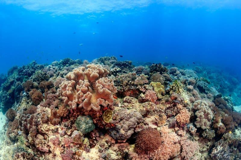 De zonnestralen verlichten een ondiep, tropisch koraalrif royalty-vrije stock afbeeldingen