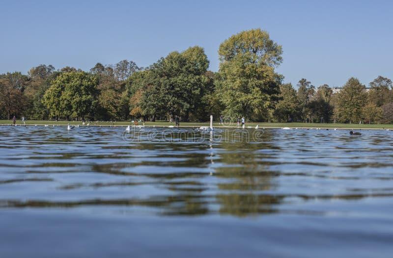 De zonnige herfst in Hyde Park - blauwe wateren van een vijver, bomen en vogels stock fotografie