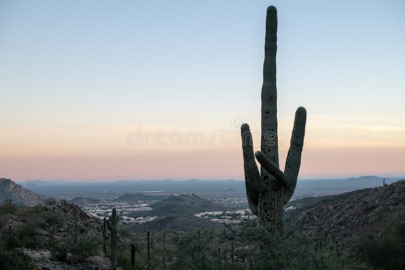 De Zonsondergang Arizona van de Saguarocactus royalty-vrije stock foto's