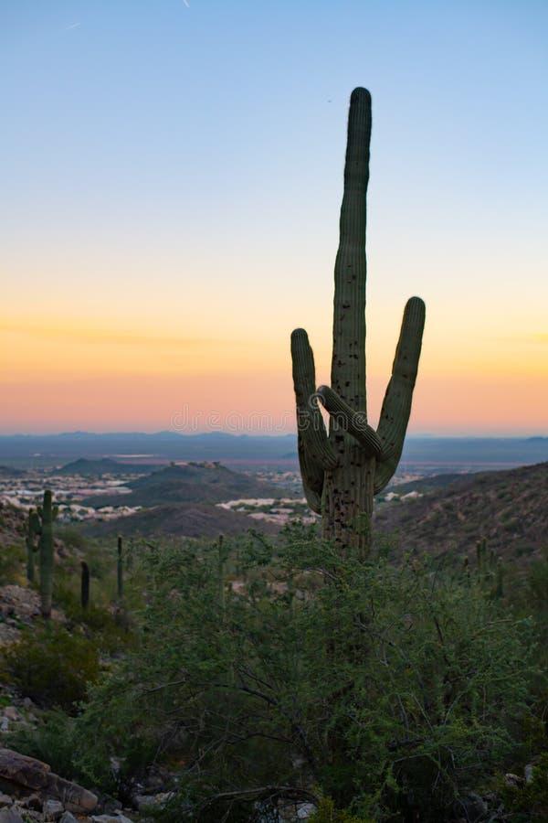 De Zonsondergang Arizona van de Saguarocactus stock afbeeldingen
