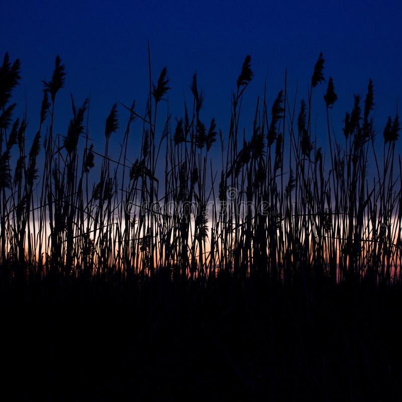 De zonsondergang boven Zlicin kleurt riet royalty-vrije stock foto