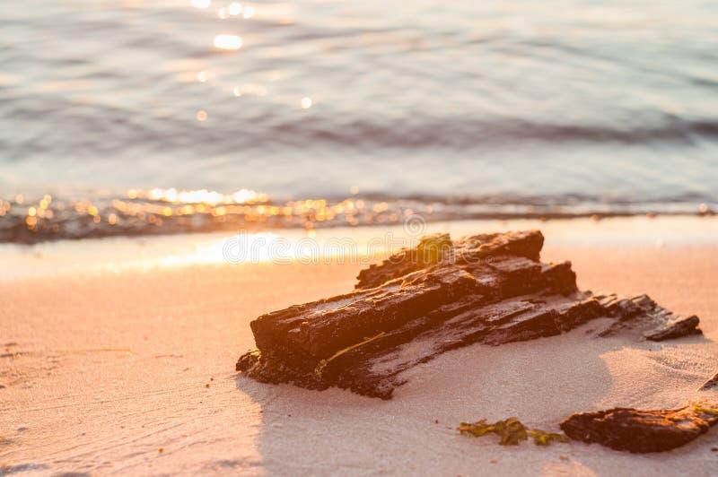 De zonsondergang Een deel van de boom op het strand stock afbeelding
