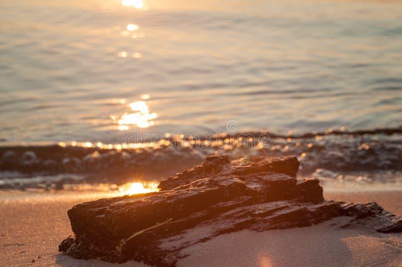 De zonsondergang Een deel van de boom op het strand royalty-vrije stock fotografie