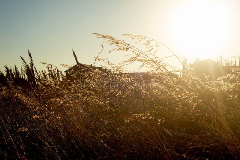 De zonsondergang op het gebied, het gras kan het dakhuis worden gezien De zomer is uit dorp stock afbeeldingen