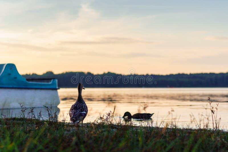 De zonsondergang over het recreatieve meer, u kan eenden en boten zien Mooie oranje kleuren, grote contrastvakantie en rust royalty-vrije stock foto