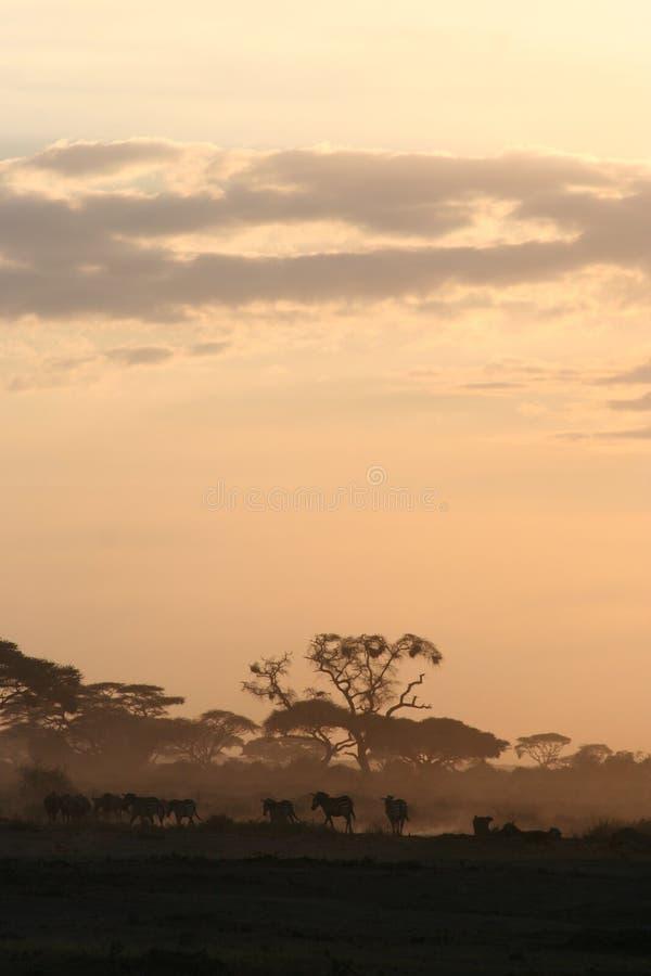 De Zonsondergang van Amboseli stock afbeeldingen
