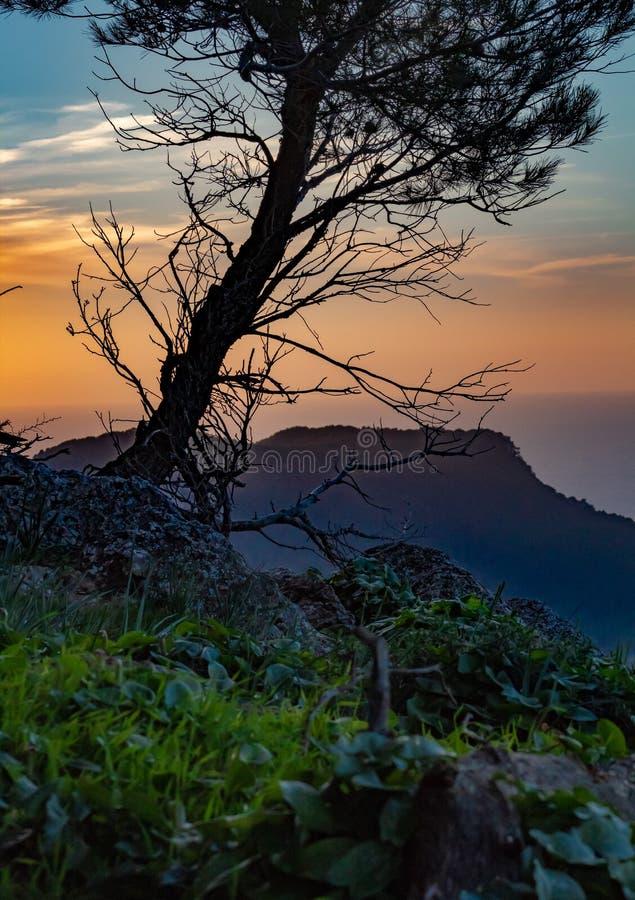 De zonsondergang van de Backlightboom in Mallorca stock afbeeldingen