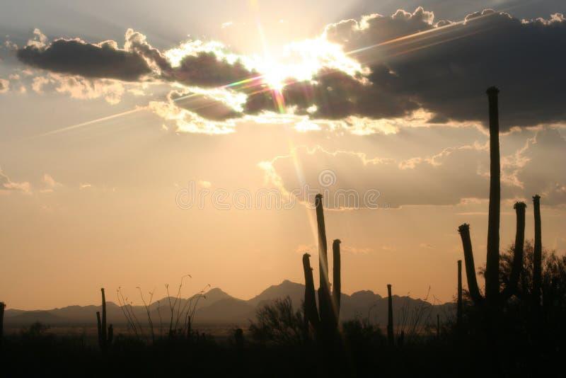 De Zonsondergang van de cactus stock afbeeldingen
