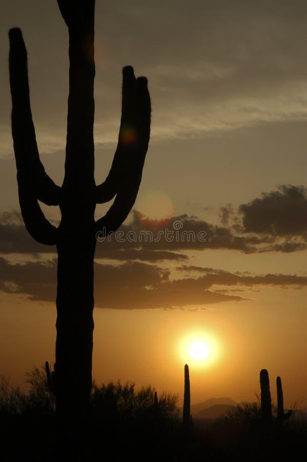 De Zonsondergang van de Cactus van Saguaro stock afbeelding