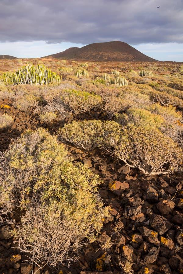 De Zonsondergang van de cactuswoestijn in de Canarische Eilanden van Tenerife stock foto