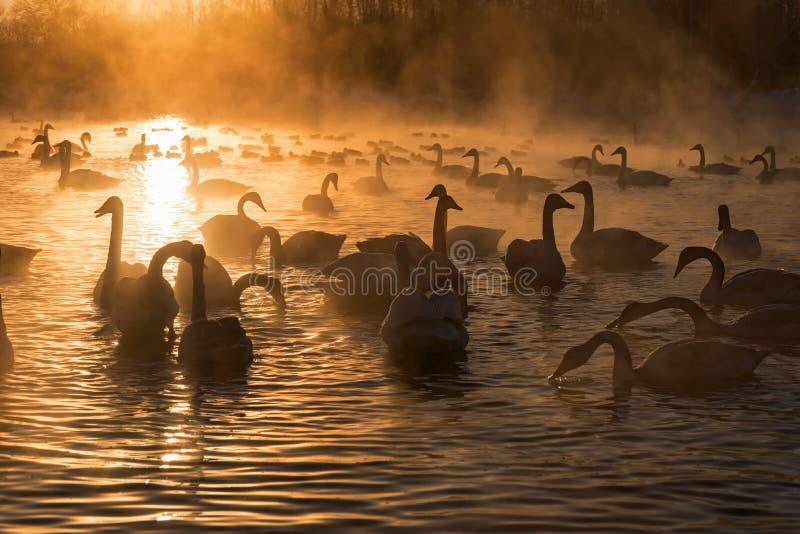 De zonsondergang van de de mistwinter van het zwanenmeer stock afbeelding