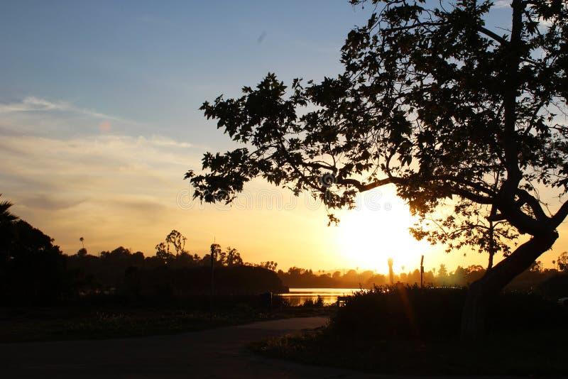 De zonsondergang van de eendvijver royalty-vrije stock foto's