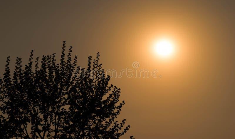 De zonsondergang van de esdoornboom stock fotografie