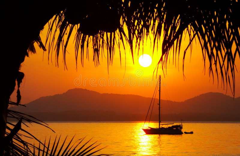 De zonsondergang van de kokosnoot stock fotografie