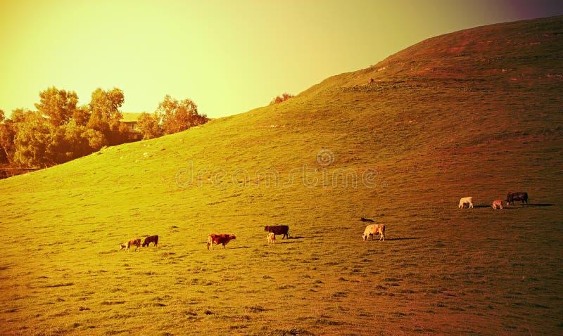 De zonsondergang van de landbouwgrond stock foto's