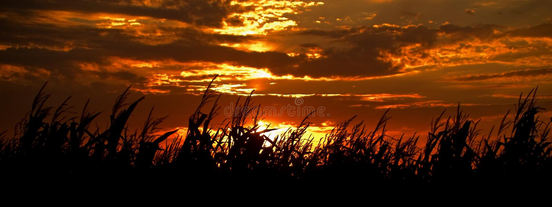De Zonsondergang van de oogst stock foto's
