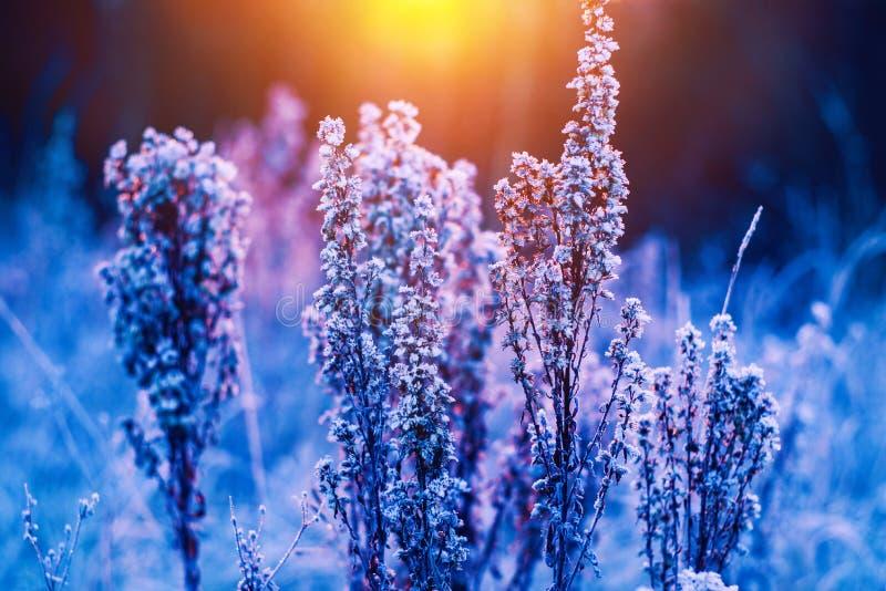 De zonsondergang van de weidewinter royalty-vrije stock afbeeldingen