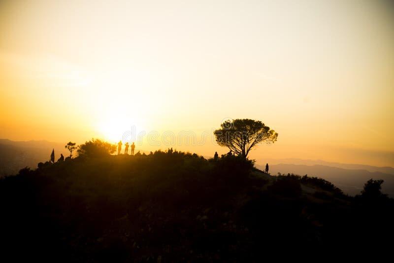 De Zonsondergang van de wijsheidsboom stock afbeelding