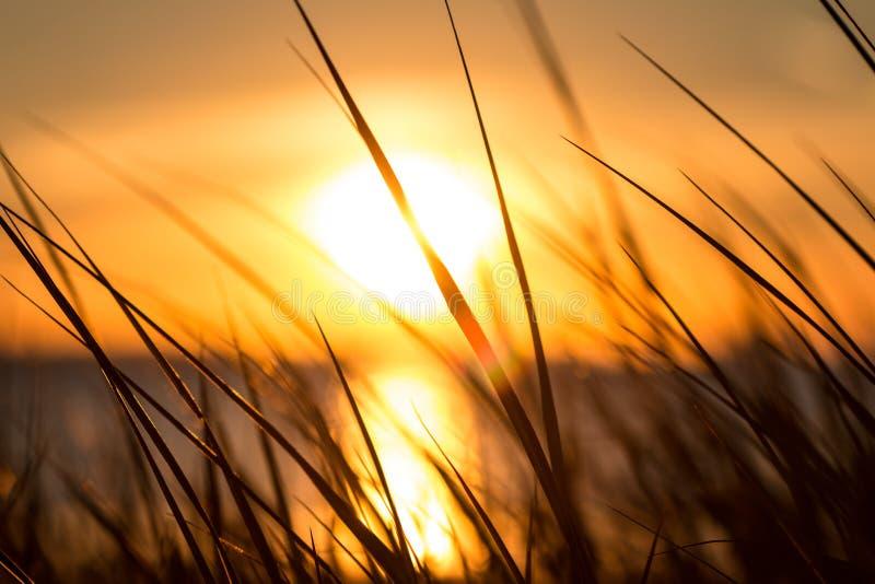 De zonsondergang van Florida royalty-vrije stock foto