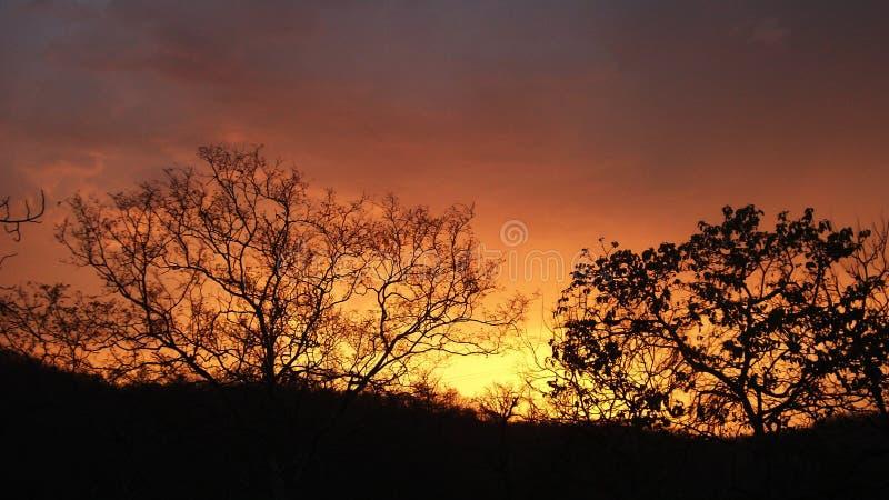 De zonsondergang van het boomsilhouet stock afbeeldingen