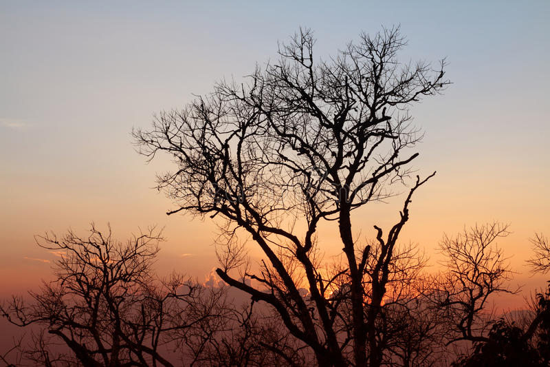 De zonsondergang van het de takkensilhouet van de boom stock fotografie