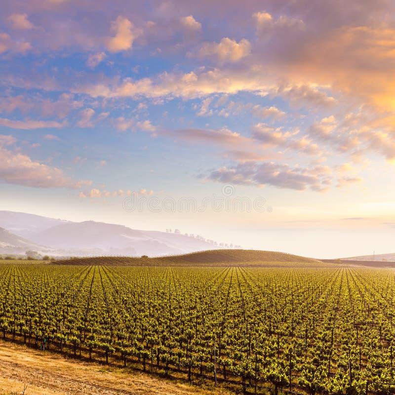 De zonsondergang van het de wijngaardgebied van Californië in de V.S. royalty-vrije stock foto's