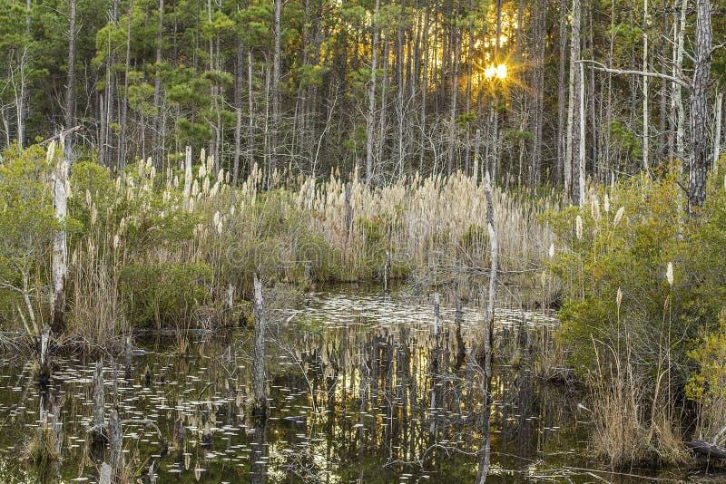 De Zonsondergang van het moerasgebladerte stock fotografie