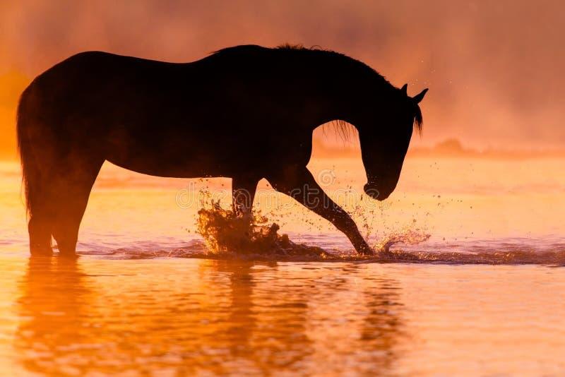 De zonsondergang van het paardsilhouet royalty-vrije stock afbeelding
