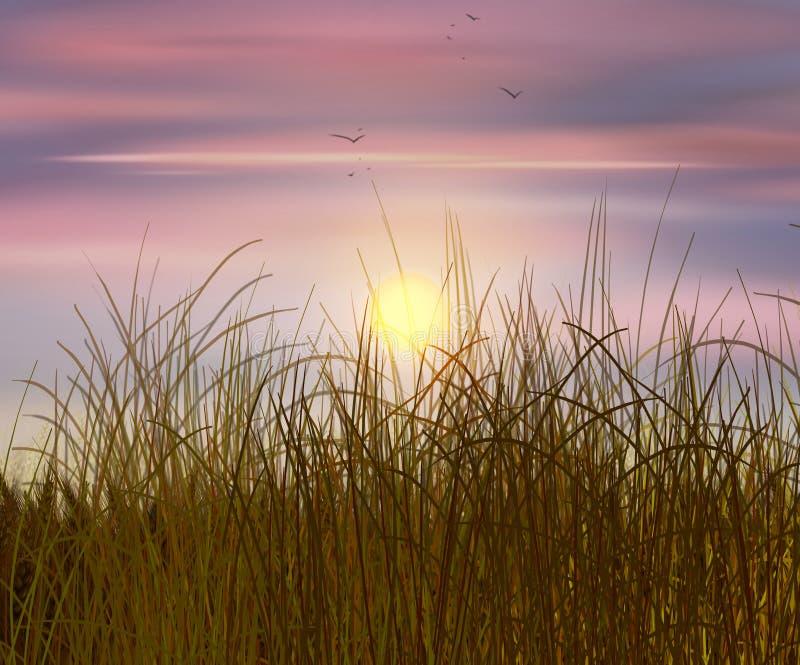 De zonsondergang van het tarwegebied stock fotografie