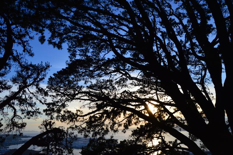 De zonsondergang van Nice met silhouetten van takken stock afbeelding