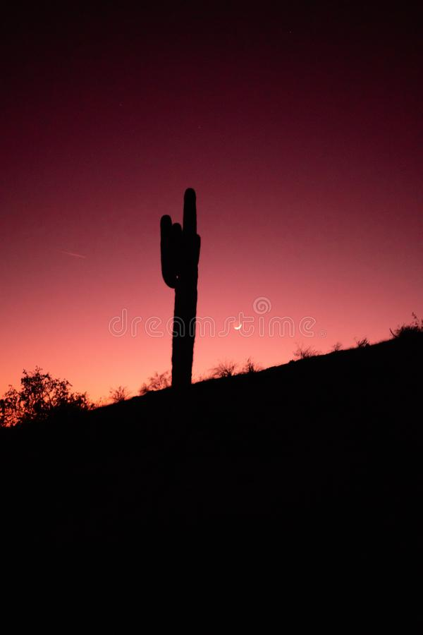 De Zonsondergang van de Sonoranwoestijn royalty-vrije stock afbeelding