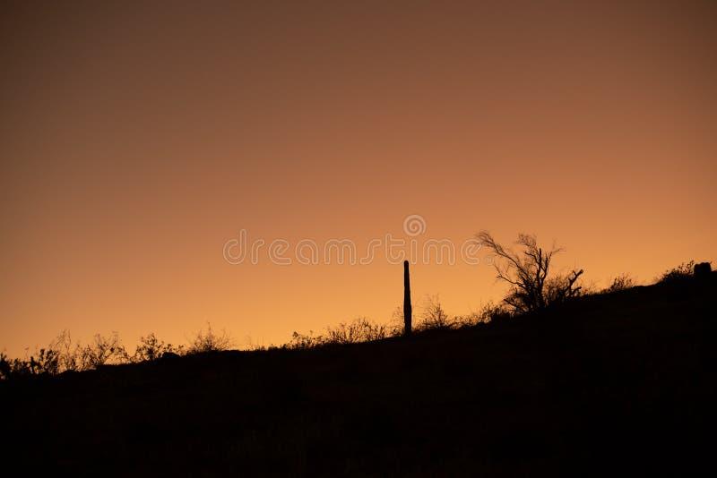 De Zonsondergang van de Sonoranwoestijn stock afbeeldingen