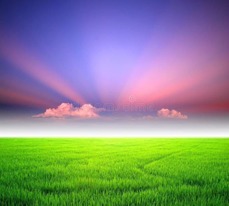 De zonsonderganglandbouwbedrijf van de rijst royalty-vrije stock fotografie