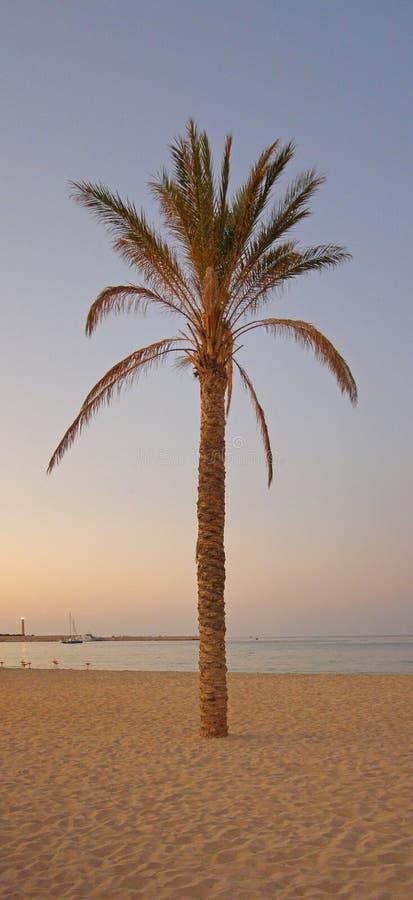 De zonsondergangpanorama van de palm