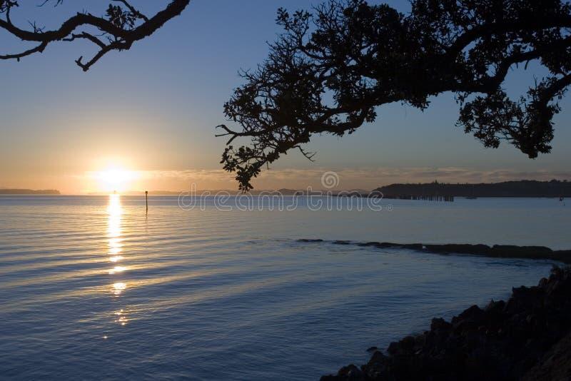 De Zonsopgang van Auckland stock foto's