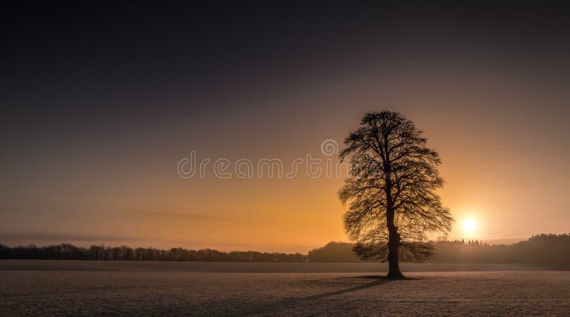 De Zonsopgang van de de Boomvorst van de de winterochtend stock fotografie
