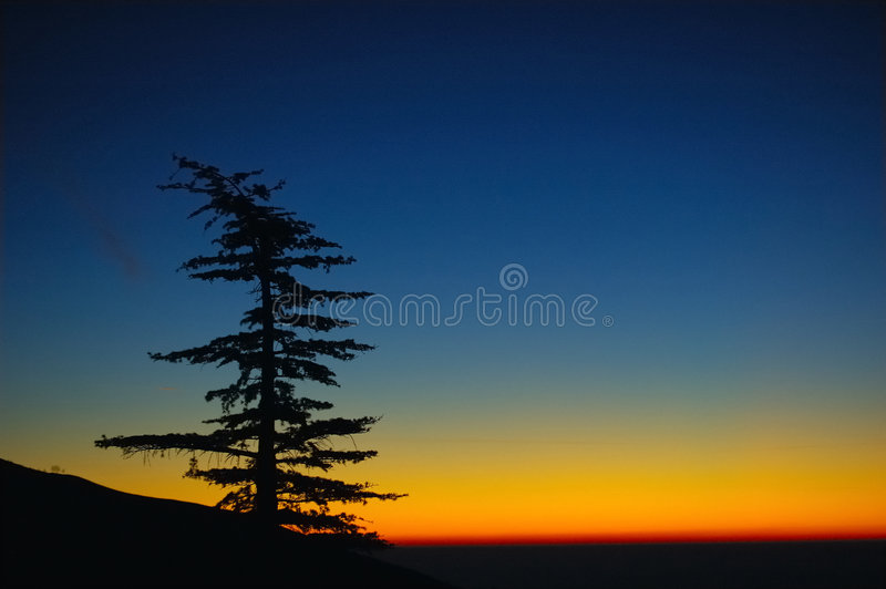 De zonsopgang van de pijnboom royalty-vrije stock afbeelding