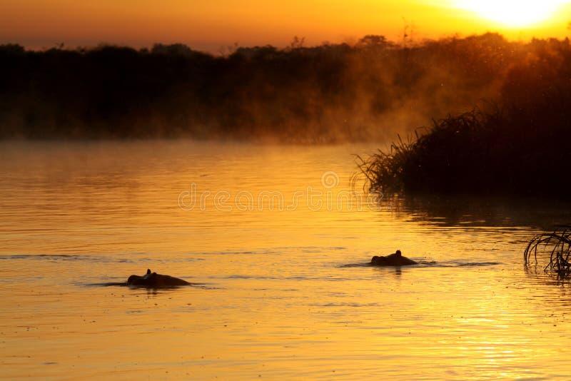 De Zonsopgang van de Rivier van Nijl stock afbeelding
