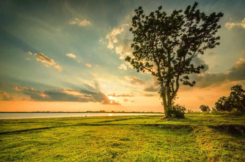 De zonsopgang van de zomer stock foto