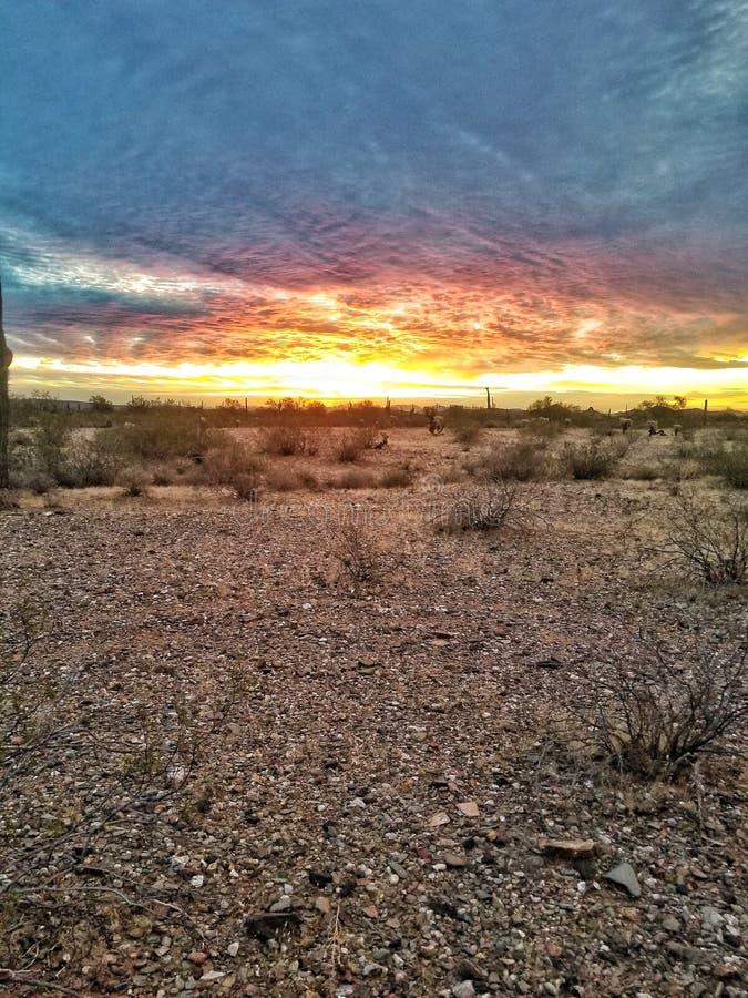 De Zonsopgang van de Woestijn van Sonoran stock foto's