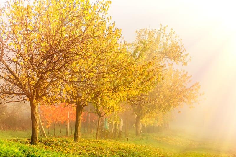 De zonsopganglandschap van de de herfstochtend De kant van het land met kleurrijke gele bomen en wijngaarden in mist Zuid-Moravië stock afbeelding