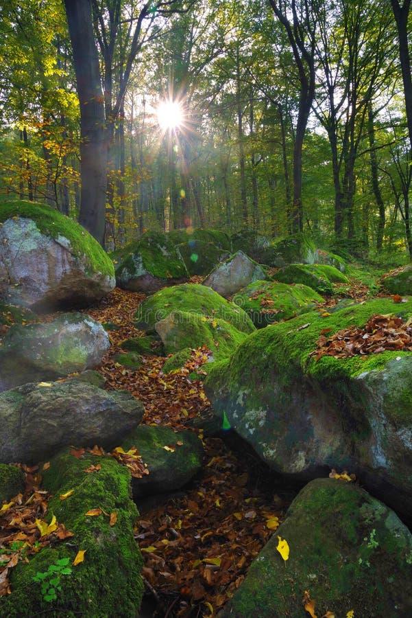 De zonstralen gaan door de bomen en de gloed in de voorgrond mooie die stenen met bosmos worden behandeld over stock fotografie