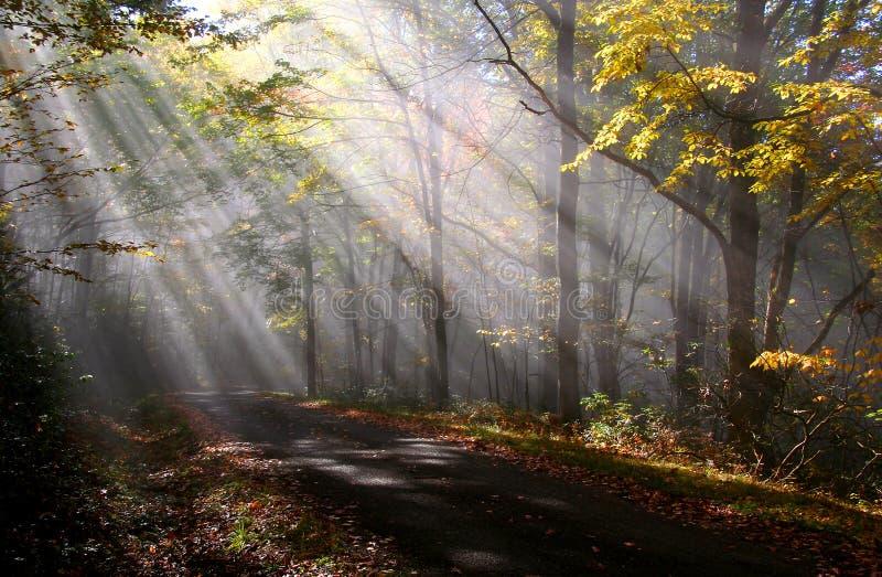 De zonstralen van de ochtend stock foto