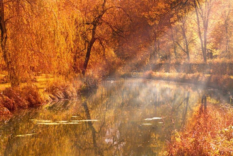 De zonstralen van het de herfstmeer stock foto's